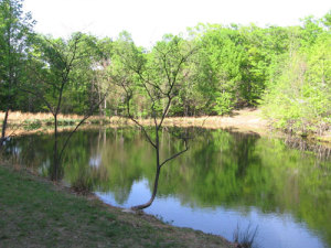 The pristine, spring fed pond is a two minute walk from the cabin and is 20 feet deep at center.